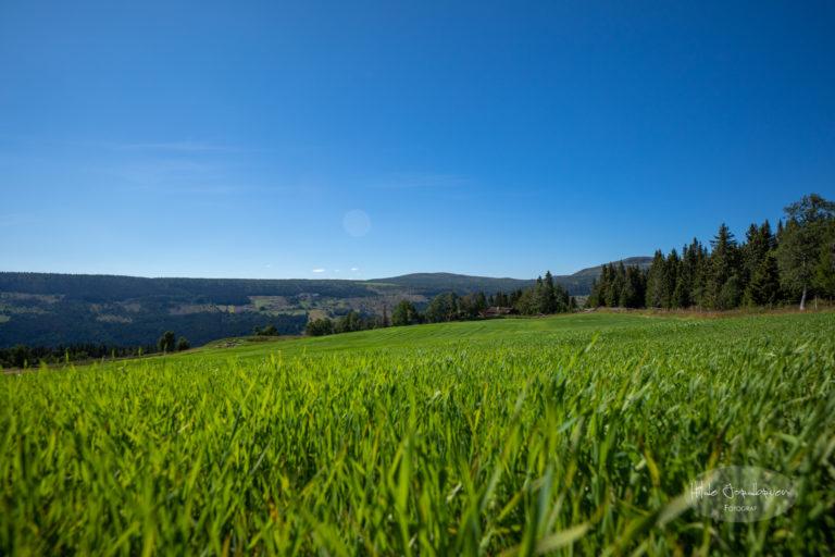 Slik ser det ut når åkeren står grønn og frodig i fjellbygda