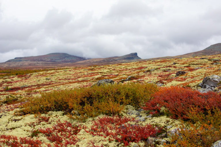 Kanskje du skal gifte deg på høsten? I september er høstfargene på sitt aller fineste!